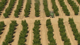 AI06_FRM_114 - 1080 stock footage aerial video a tractor between rows of trees, Central Valley, California