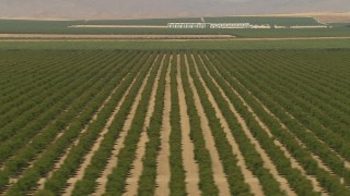 AI06_FRM_115 - 1080 stock footage aerial video flying by rows of trees, farm buildings in the distance, Central Valley, California
