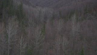 AK0001_0635 - 4K stock footage aerial video flying over trees, revealing river through forest, wooded hills, Birchwood, Alaska