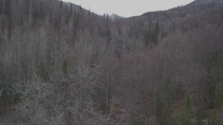 AK0001_0638 - 4K stock footage aerial video flying low over trees, between forested hills, Birchwood, Alaska