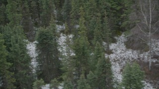 AK0001_0643 - 4K stock footage aerial video tracking moose trotting over snow, through trees, Birchwood, Alaska