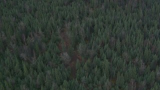 AK0001_0692 - 4K stock footage aerial video bird's eye view flying over a forest during winter, Butte, Alaska
