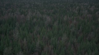 AK0001_0693 - 4K stock footage aerial video flying over forest, tilt down to trees, during winter, Butte, Alaska