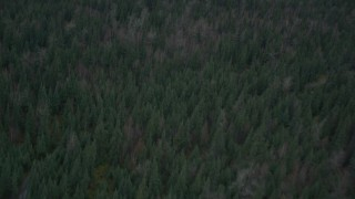 AK0001_0694 - 4K stock footage aerial video a bird's eye view of forest during winter, Butte, Alaska