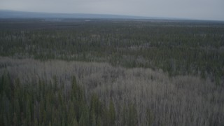 AK0001_0970 - 4K stock footage aerial video flying over forests, during winter, Alaskan Wilderness