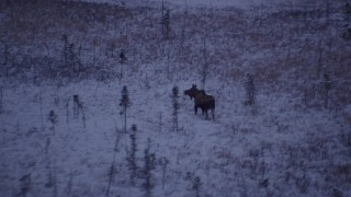 AK0001_1702 - 4K stock footage aerial video flying over frozen, snowy grass beside a forest at twilight, Point MacKenzie, Alaska