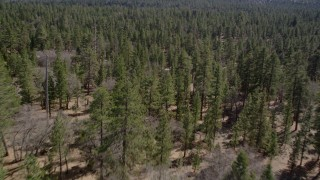 AX0010_051 - 5K stock footage aerial video descend to fly low over forest in the San Bernardino Mountains, California