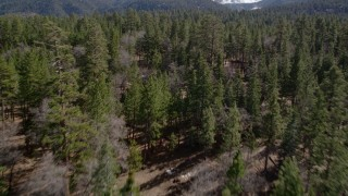 AX0010_052 - 5K stock footage aerial video fly low over forest in the San Bernardino Mountains, California