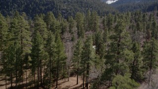 AX0010_054 - 5K stock footage aerial video of flying low over forest with a few patches of snow in the San Bernardino Mountains, California