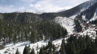 AX0010_058 - 5K stock footage aerial video fly over forest with snow and tilt to reveal San Bernardino Mountains in winter, California