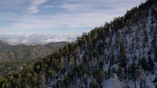 AX0010_064 - 5K stock footage aerial video fly over frozen slopes with evergreen trees in winter in the San Bernardino Mountains, California