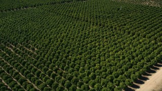 AX0014_061 - 5K stock footage aerial video of orbiting an orchard, Temecula, California