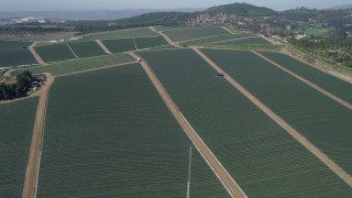 AX0015_031 - 5K stock footage aerial video fly over farmland, Fallbrook, California