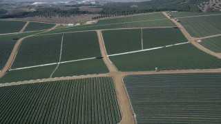 AX0015_032 - 5K stock footage aerial video fly over crop fields, Fallbrook, California