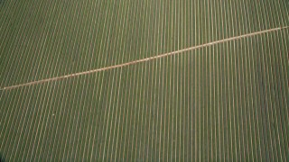 AX0015_038 - 5K stock footage aerial video of a bird's eye view of fields of crops, Fallbrook, California