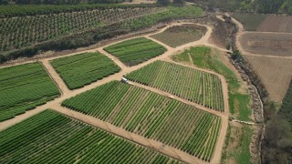 AX0015_041 - Aerial stock footage of 5K aerial  video tilt to crops while flying over farmland, Fallbrook, California