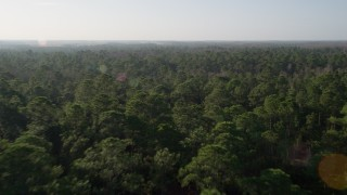 AX0018_033 - 5K stock footage aerial video fly over forest in Orlando at sunrise in Florida