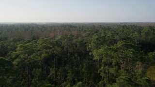 AX0018_034 - 5K stock footage aerial video fly over Orlando forest at sunrise in Florida