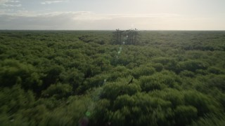 AX0018_058 - 5K stock footage aerial video fly low over forest near Orlando at sunrise, Florida