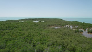 AX0025_077 - 5K stock footage aerial video of flying over large area of mangroves, Key Largo, Florida