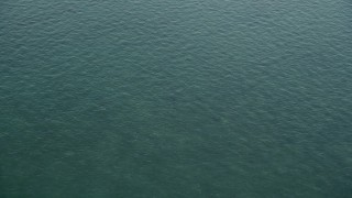 AX0028_008 - 5K stock footage aerial video of a shark swimming in the ocean near Marathon, Florida