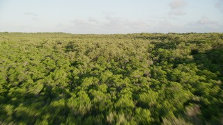 AX0028_014 - 5K stock footage aerial video of flying low over mangroves at sunset on Long Key, Florida