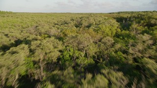 AX0028_015 - 5K stock footage aerial video of flying low over mangroves at sunset on Long Key, Florida