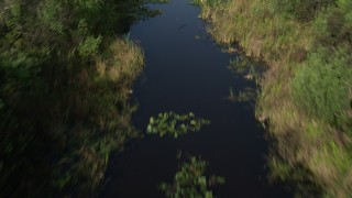 AX0030_014 - 5K stock footage aerial video of following river through everglades, revealing alligator, Florida Everglades, Florida