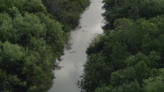 AX0030_022 - 5K stock footage aerial video of flying by alligators in a river, Florida Everglades, Florida