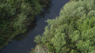 AX0030_023 - 5K stock footage aerial video of flying by an alligator in a river, Florida Everglades, Florida