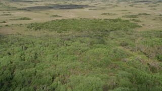 AX0030_037 - 5K stock footage aerial video of flying over trees and marshland, Florida Everglades, Florida