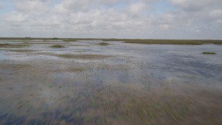 AX0030_075 - 5K stock footage aerial video of flying low over marshland, Florida Everglades, Florida