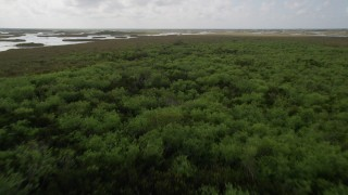 AX0030_079 - 5K aerial stock footage video of flying over trees near marshes in the Florida Everglades, Florida