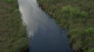 AX0030_100 - 5K stock footage aerial video of following a river, revealing an alligator in the water, Florida Everglades, Florida