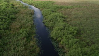 AX0030_104 - 5K stock footage aerial video of following river with birds flying along the surface, Florida Everglades, Florida