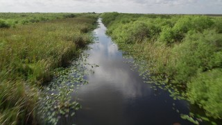AX0030_107 - 5K stock footage aerial video of following river with birds flying along the surface, Florida Everglades, Florida
