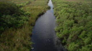 AX0030_110 - 5K stock footage aerial video of a river with birds flying over the water in the Florida Everglades, Florida