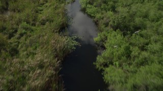 AX0030_113 - 5K stock footage aerial video of approaching birds flying over river, Florida Everglades, Florida