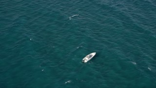AX0032_056 - 5K stock footage aerial video of approaching a speedboat, Boynton Beach, Florida