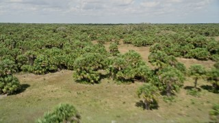 AX0034_032 - 5K stock footage aerial video fly low over palm trees, Cocoa, Florida