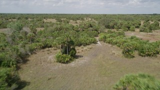 AX0034_033 - 5K stock footage aerial video fly low over palm trees, Cocoa, Florida