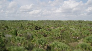 AX0034_034 - 5K stock footage aerial video fly low over palm trees and forest, Cocoa, Florida