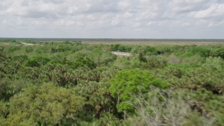AX0034_036 - 5K stock footage aerial video of panning across palm trees and deciduous trees, Cocoa, Florida
