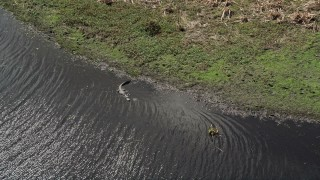 AX0034_040 - 5K stock footage aerial video of an alligator in the river, Cocoa, Florida