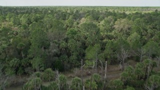 AX0034_054 - 5K stock footage aerial video of flying low over forest, tilt to wider view of forest, Cocoa, Florida