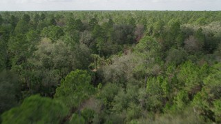 AX0034_055 - 5K stock footage aerial video fly low over forest trees in Cocoa, Florida