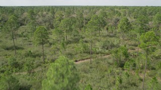 AX0034_056 - 5K stock footage aerial video of flying low over forest and clearings, Cocoa, Florida