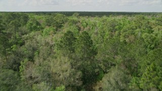 AX0034_058 - 5K stock footage aerial video of flying low over green forest trees, Cocoa, Florida