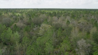 AX0034_059 - 5K stock footage aerial video fly low over forest, Cocoa, Florida