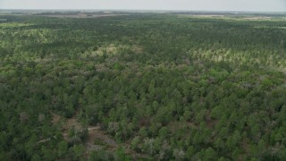 AX0034_061 - 5K stock footage aerial video fly over forest, La Belle, Florida